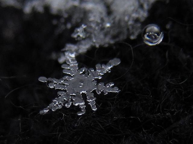 融けかけた雪の結晶