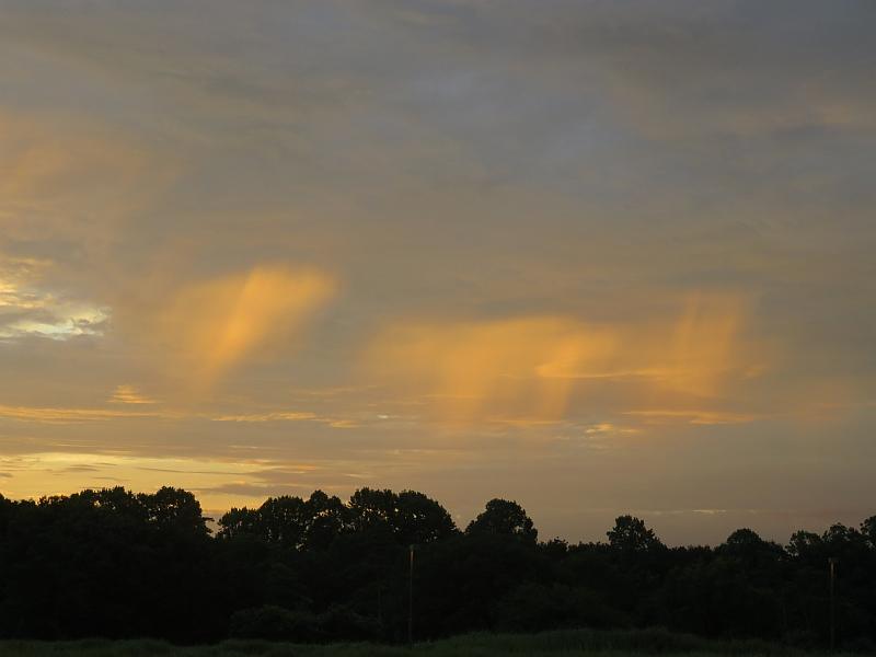 夕日に照らされて光る雨
