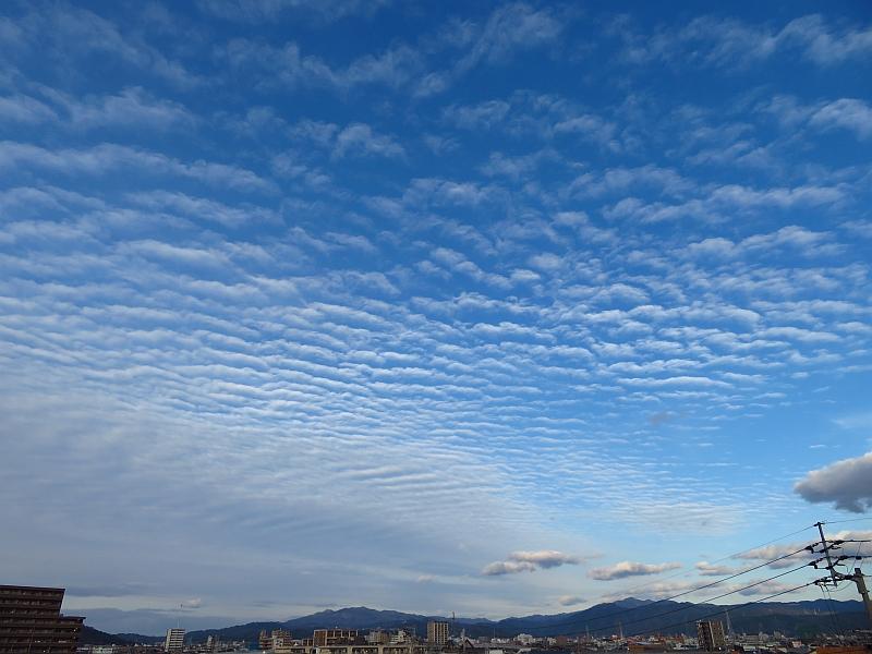 いわし雲やひつじ雲