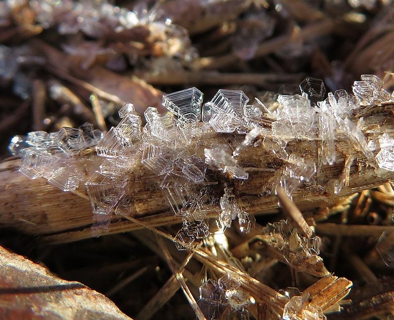 美しい霜たち